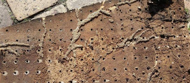 termites-cordons