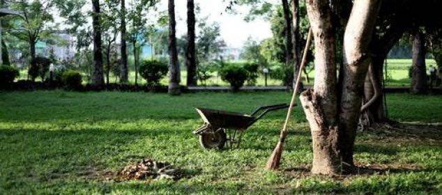 Plantation, entretien et taille du poirier