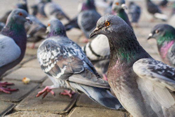Les dispositifs anti-oiseaux et pigeons