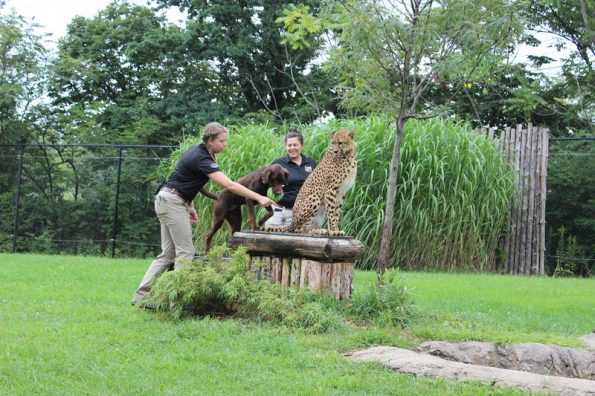 zoo et jardin botanique de Cincinnati