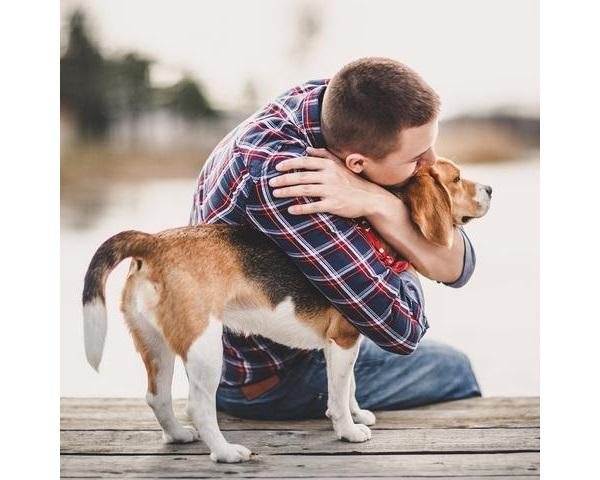Élever un chien